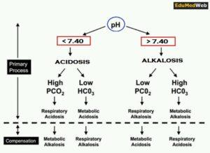 ABG Interpretation In 4 Easy Steps
