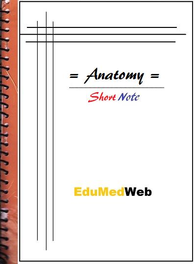 anatomy-short-note